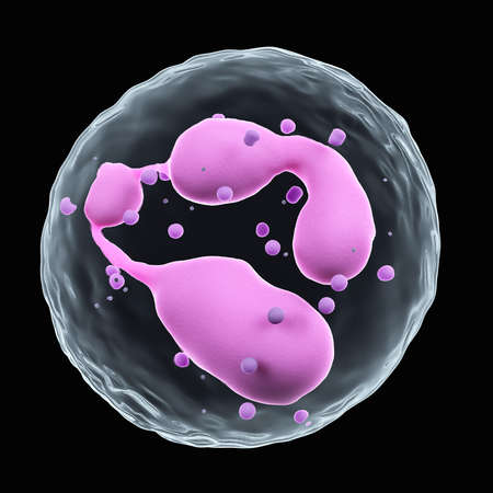 medically accurate illustration of neutrophil