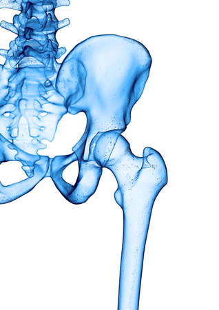 accurate medical illustration of the hip joint
