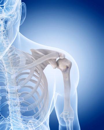 Illustrazione medico accurato dello scheletro umano - spalla Archivio Fotografico - 44543336