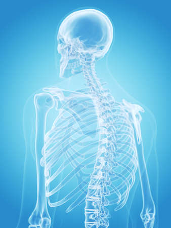 인간의 골격 - 의학적으로 정확한 그림