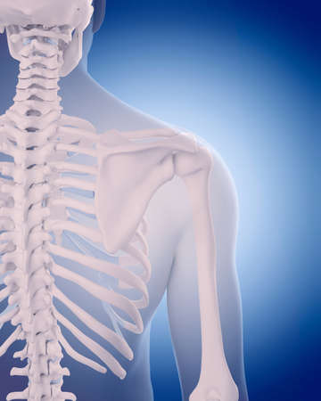 medically accurate illustration - bones of the shoulder