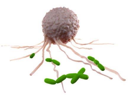 medically accurate illustration of a leucocyte attacking bacteria Stock Photo