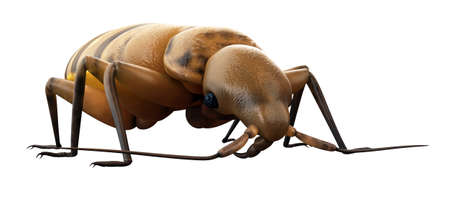 medically accurate illustration of a bed bug Stock Photo