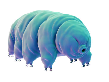 medically accurate illustration of a water bear Stock Photo