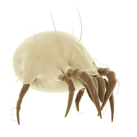medically accurate illustration of a common dust mite Stock Illustration - 45345439