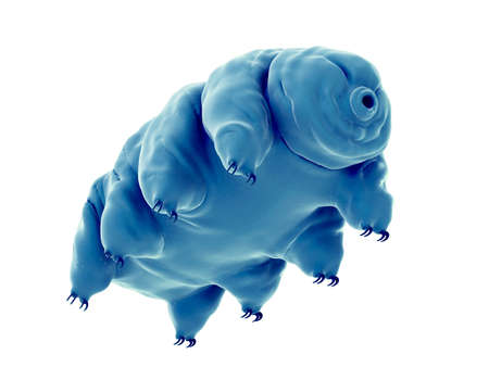medically accurate illustration of a water bear 写真素材