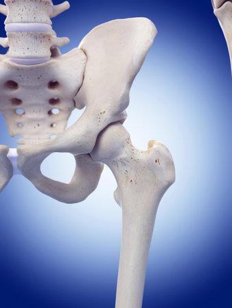 illustrazione medico accurato dell'articolazione dell'anca