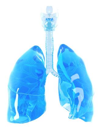 Medizinisch genaue Darstellung eines Glas Lungen Standard-Bild - 45345757