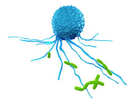 Ilustración médica precisa de un leucocitos atacar bacterias Foto de archivo - 45345807