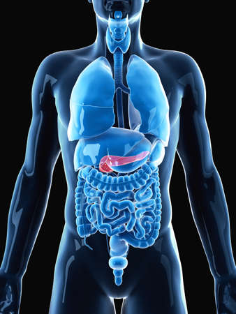 medically accurate illustration of the pancreas Stock Photo