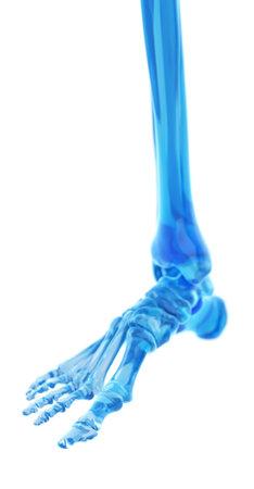 medisch nauwkeurige illustratie van de voet botten