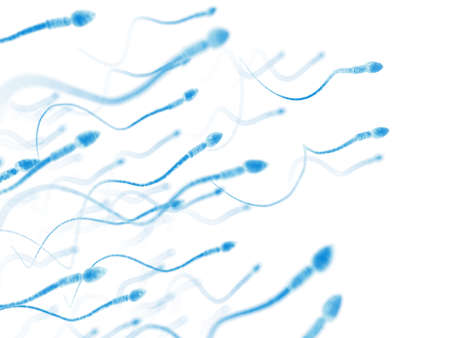medically accurate illustration of human sperms