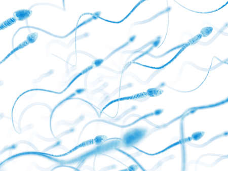 인간의 정자에 대한 의학적으로 정확한 그림