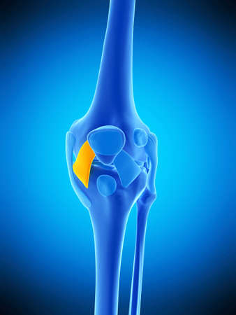 Medically Accurate Illustration Of The Medial Patellar Ligament ...