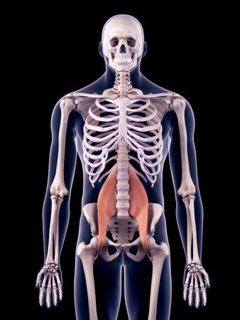 Das Menschliche Gefäßsystem - Die Hüfte Lizenzfreie Fotos, Bilder ...