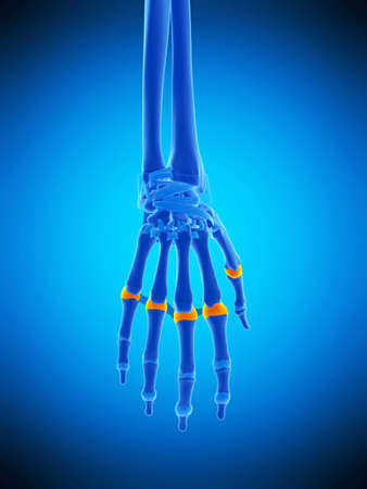 medically accurate illustration of the proximal joint capsules Stock Photo