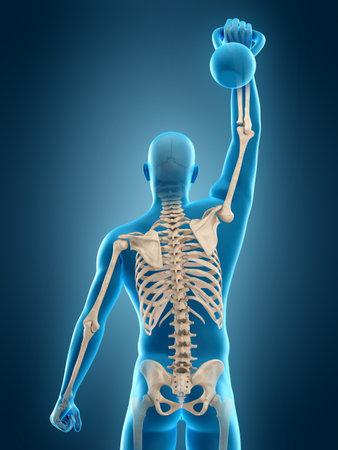 medizinisch genaue 3D-Darstellung eines Athleten mit Wasserkocher