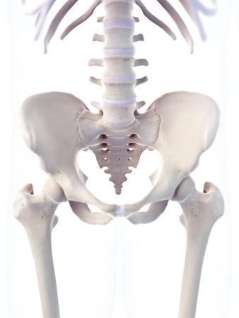 medisch nauwkeurige 3D-afbeelding van het skelet sacrum