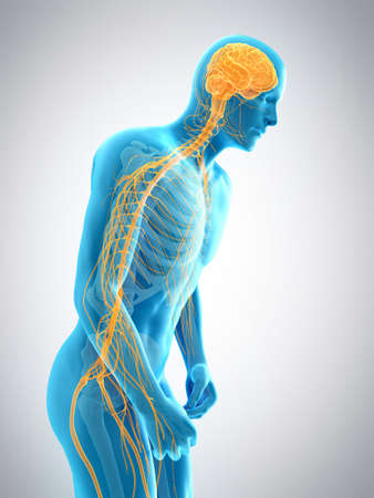 medically accurate 3d illustration of parkinson