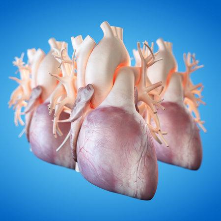 El Corazón Humano Rinde / Corazón Humano / Aislado En Blanco Fotos ...