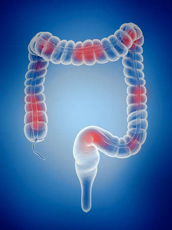3d rendered illustration of the large intestine Zdjęcie Seryjne