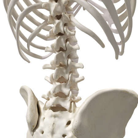 medically accurate 3d rendering of the lumbar spine