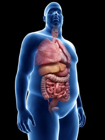 Illustration Von Männlichen Körper Lymph- Und Verdauungssystem ...