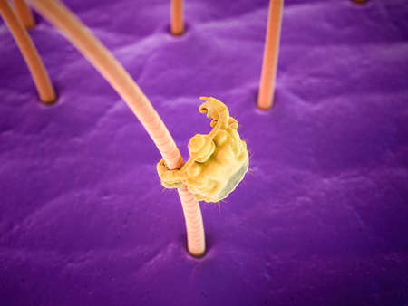 medically accurate 3d rendering of a pubic louse