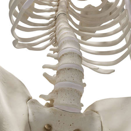 medically accurate 3d rendering of the lower spine