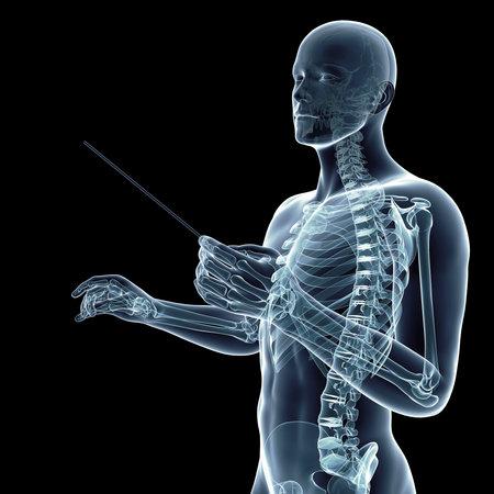 medisch nauwkeurige 3D-weergave van een dirigent Stockfoto