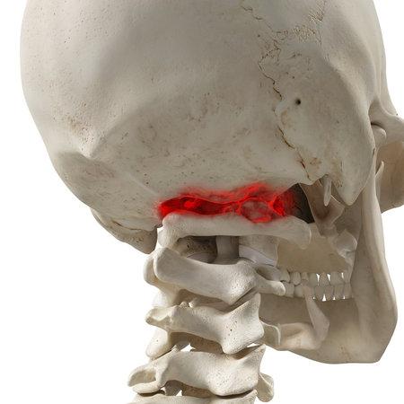 관절염 아틀라스의 3 차원 렌더링 의학적으로 정확한 일러스트 레이션 스톡 콘텐츠