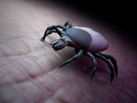 3d rendered medically accurate illustration of a tick