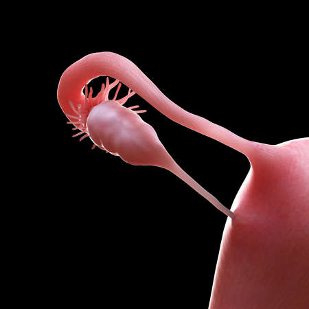 3d rendered medically accurate illustration of the uterus