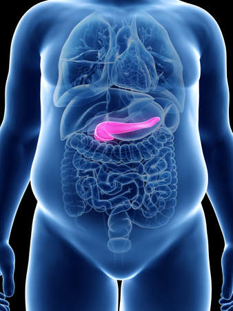 3d rendered medically accurate illustration of an obese mans pancreas Stock Photo