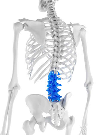 3d rendered medically accurate illustration of the lumbar spine Reklamní fotografie