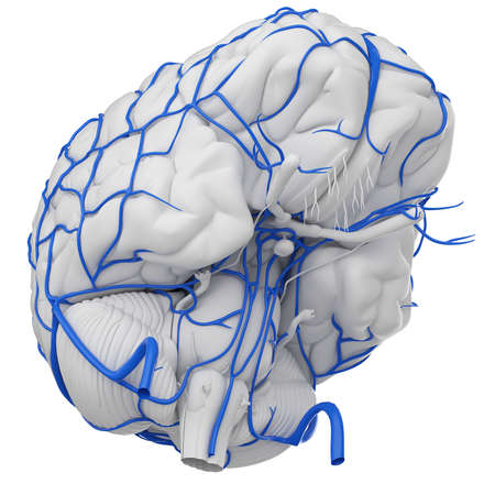 3d rendered medically accurate illustration of the brain veins Stock Illustration - 87518211