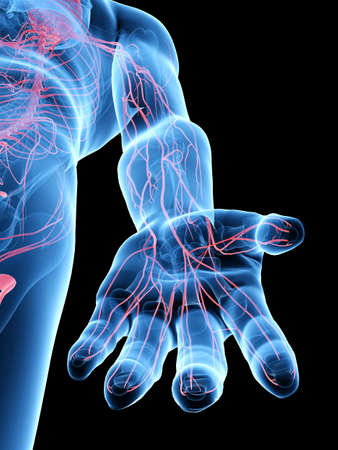 3d rendered medically accurate illustration of the hand nerves