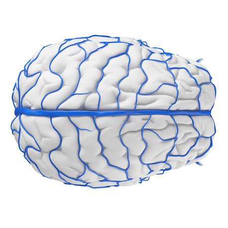 3d rendered medically accurate illustration of the brain veins Stock Illustration - 87518225