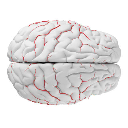 3d rendered medically accurate illustration of the brain arteries Stock Illustration - 87518270