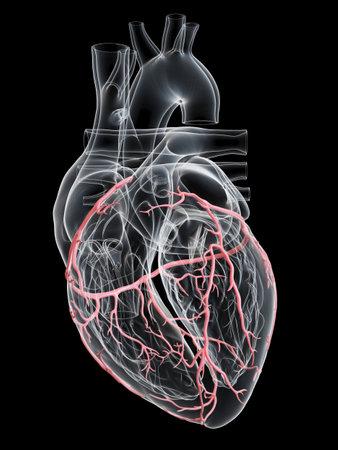 3D rendu médicalement précis illustration des artères coronaires