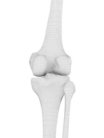 3d rendered medically accurate illustration of the knee bones