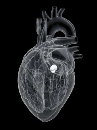 3d rendered medically accurate illustration of the aortic valve