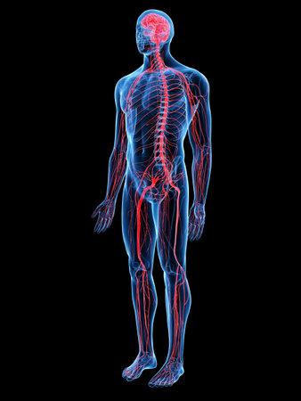 3d teruggegeven medisch nauwkeurige illustratie van het zenuwstelsel Stockfoto