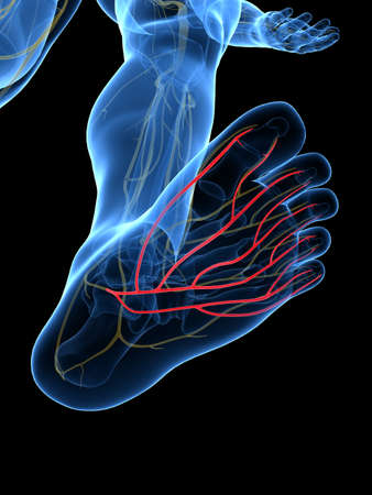 3d rendered medically accurate illustration of the Plantar Nerve Stock Photo