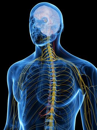 3d übertrug medizinisch genaue Illustration des Vagus-Nervs Standard-Bild