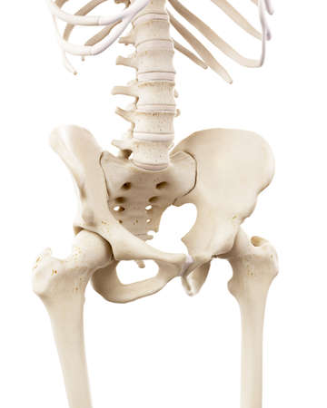 3d rendered medically accurate illustration of the human skeletal pelvis