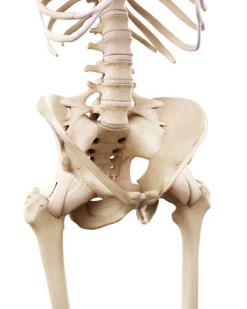 medically accurate illustration of the human skeletal hip