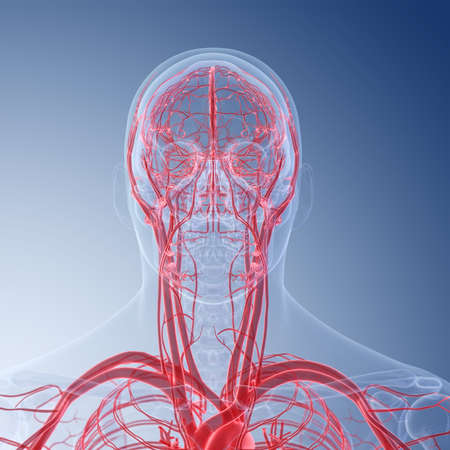 3d rendered medically accurate illustration of the human head blood vessels