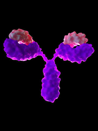 3d rendered medically accurate illustration of an antibody Foto de archivo - 100706586