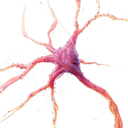 3d rendered medically accurate illustration of the human nerve cell